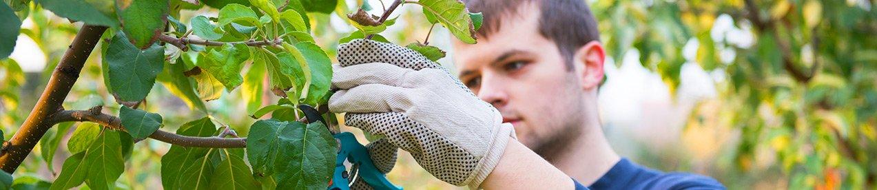 D clarer votre employ e de maison ch que service for Jardinier domicile